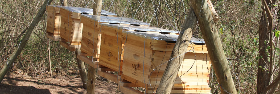 Beekeeping as Income Generating Activity