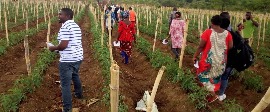 Boot Camp on Tomato Farming  to Youth